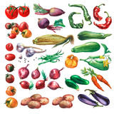 Set, collection of fresh vegetables. Hand drawn watercolor painting on white background Stock Image