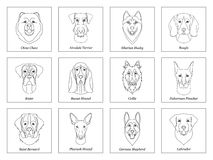 Set, collection of isolated black outline head of airedale terrier, chow, husky, pharaoh hound, saint bernard, labrador, collie, d Stock Image
