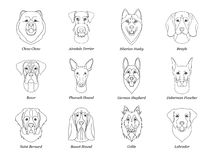 Set, collection of isolated black outline head of airedale terrier, chow, husky, pharaoh hound, saint bernard, labrador, collie, d vector illustration