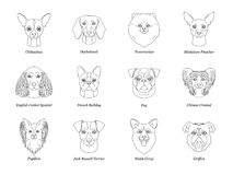 Set, collection of isolated black outline head of chihuahua dachshund, papillon, spitz, pug, miniature pinscher welsh corgi french royalty free illustration