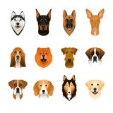 Set, collection of isolated colorful head and face of airedale terrier, beagle, chow, husky, pharaoh hound, saint bernard, labrado Stock Photo