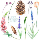 Set, collection with the isolated watercolor forest elements (berries, cones, lavender, wildflowers and branches) Stock Photos