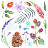 Set, collection with the isolated watercolor forest elements (berries, cones, lavender, wildflowers and branches). A set, collection with the floral isolated Stock Images