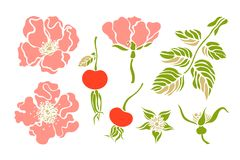 Set, collection with rose hips wild roses flower berry. Botanical background. Vector illustration Stock Images