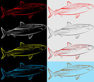 Set, Collection, Sharks Royalty Free Stock Photos