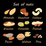 Set collection of various nuts Royalty Free Stock Image
