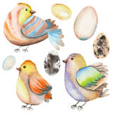 Set, collection of the watercolor birds and eggs Royalty Free Stock Images