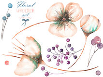 Set, collection with the watercolor isolated pink abstarct flower elements and berries. Set, collection with the watercolor pink abstract flower elements and royalty free illustration