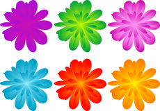 Set of color flowers Stock Image