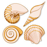 Set of color graphic sea shells. Vector illustrations. EPS10 Royalty Free Stock Photo