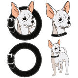 Set of color illustrations with a Chihuahua in a collar. EPS10 Royalty Free Stock Photo
