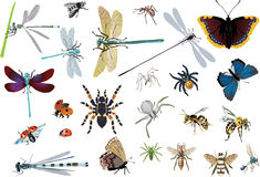 Set of color spiders and insects. Illustration with insects isolated on white background Royalty Free Stock Image