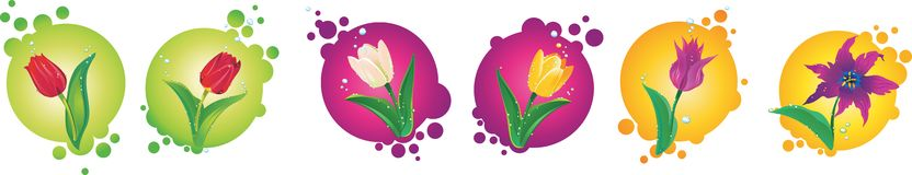Set of color tulips Stock Photo