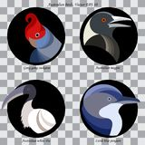 A set of colored abstract australian birds for logo. Set of colored abstract australian birds for logo, on black circles, isolated royalty free illustration
