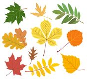Set of colored autumn leaves. Vector illustration Stock Images