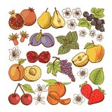 Set of colored berry and fruit icons Royalty Free Stock Photos