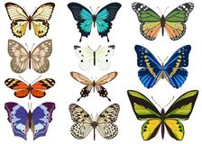 Set of colored butterflies on white background. Vector illustration. Collection of vector images of different-colored butterflies of different types in a flat royalty free illustration