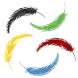 Set of colored feathers Stock Photography