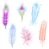 set of colored feathers isolated vector royalty free stock image