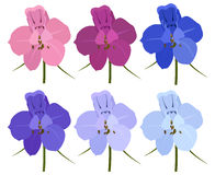 Set of 6 colored flowers. Delphinium flowers. On a white background Stock Images