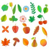 Set of colored fruits,flowers. berries, leaves and mushrooms vector illustration
