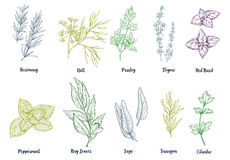 Set of colored hand drawn culinary herbs and spices Stock Photography