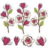 Set of colored illustration of blooming magnolia branches.  vector objects. Royalty Free Stock Photos