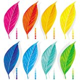 Set of colored leaves Royalty Free Stock Image