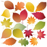 Set of colored leaves Royalty Free Stock Images