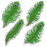 Set of colored peacock feather. EPS10 Royalty Free Stock Images