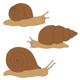 Set of colored snails. Drawing hand. Stock Image