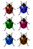Set of colored vector ladybugs stock images