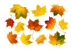 Set of colorful autumn leaves royalty free stock photography