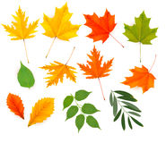 Set of colorful autumn leaves Stock Image