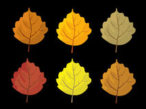 Set of colorful autumn leaves. Cartoon and flat style leafs. Black background.   Stock Photo