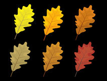 Set of colorful autumn leaves. Cartoon and flat style leafs. Black background.  Royalty Free Stock Photo