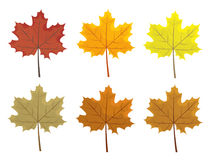 Set of colorful autumn leaves. Cartoon and flat style leafs. White background  Royalty Free Stock Images