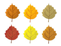 Set of colorful autumn leaves. Cartoon and flat style leafs. White background.   Royalty Free Stock Images