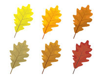 Set of colorful autumn leaves. Cartoon and flat style leafs. White background.   Stock Photo