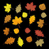 Set of colorful autumn leaves. Design elements Vector illustration.. Leafs in random Royalty Free Stock Photo