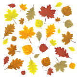 Set of colorful autumn leaves. Design elements Vector illustration.. Leafs in random Stock Image