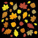 Set of colorful autumn leaves. Design elements Vector illustration.. Leafs in random Stock Images