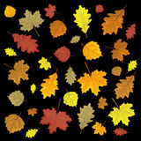 Set of colorful autumn leaves. Design elements Vector illustration.  Stock Photography