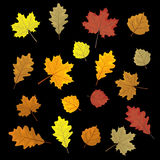 Set of colorful autumn leaves. Design elements Vector illustration  Stock Images