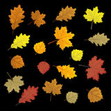 Set of colorful autumn leaves. Design elements Vector illustration.  Stock Photo