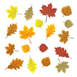 Set of colorful autumn leaves. Design elements Vector illustration  Stock Image