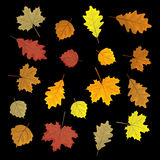 Set of colorful autumn leaves. Design elements Vector illustration. Leafs in random. Black background. Set of colorful autumn leaves. Design elements Vector Royalty Free Stock Photos