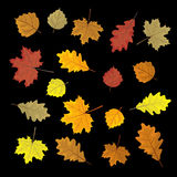 Set of colorful autumn leaves. Design elements Vector illustration. Leafs in random. Black background. Royalty Free Stock Photos