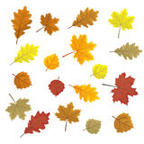 Set of colorful autumn leaves. Design elements Vector illustration. Leafs in random. White background. Royalty Free Stock Image