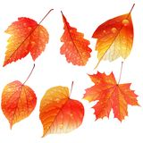Set of colorful autumn leaves. Stock Images